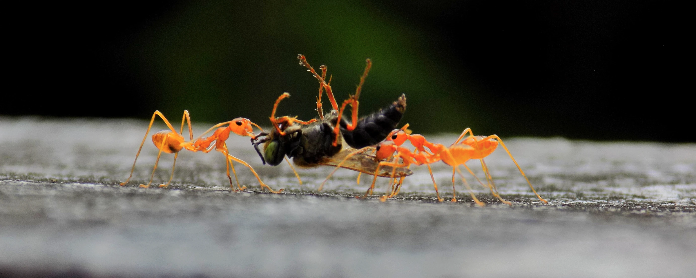 Two ants carrying a bug. Photo by Parvana Praveen on Unsplash
